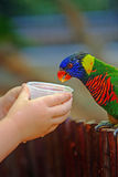 Feeding parrot Stock Photo