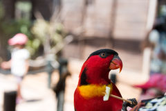 Feeding parrots at Gan Garoo Royalty Free Stock Image