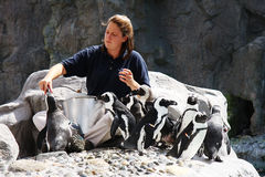 Feeding Penguins Stock Photo