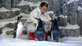 Feeding of penguins Royalty Free Stock Photography