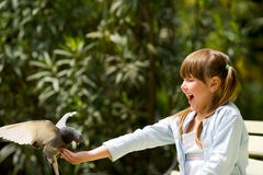 Feeding Pigeon. Girl feeding Pigeon sitting on hand Stock Photography