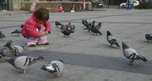 Feeding pigeons. Child feeding pigeons in urban scenery Stock Photography