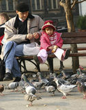 Feeding pigeons. Child feeding pigeons with her father Stock Photography