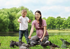 Feeding the pigeons Stock Photography
