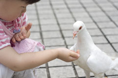 Feeding pigeons Stock Image
