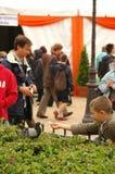 Feeding the Pigeons Royalty Free Stock Photo