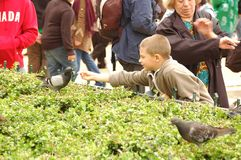 Feeding the Pigeons Stock Image
