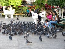 Feeding the Pigeons in Downtown Merida Royalty Free Stock Photos