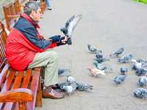Feeding pigeons in Edinburgh: bird in the hand. Royalty Free Stock Photos