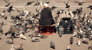 Feeding the pigeons. Elderly woman feeding pigeons on the street. Old lonely woman feeding birds in the center of the. Big city. Concept of kindness stock image