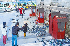 Feeding the pigeons Stock Image