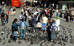 Feeding pigeons in London Stock Photos