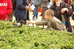 Feeding the Pigeons, Paris Stock Photo