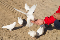 Feeding pigeons in a park Royalty Free Stock Photography