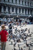 Feeding pigeons in the Piazza San Marco. Venice. Royalty Free Stock Photography