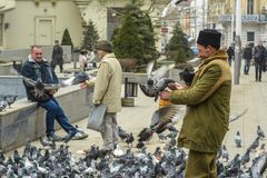 Feeding pigeons Stock Photos