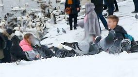 Feeding Pigeons in Winter in Prague stock video footage