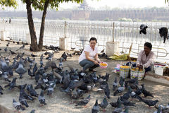 Feeding Pigeons. A woman feed pigeons in downtown Mandalay in Myanmar Royalty Free Stock Images