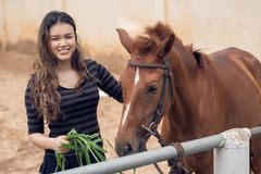 Feeding pony Stock Photo