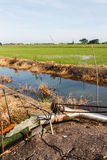 Feeding pump in rice field. In Thailand Royalty Free Stock Photography