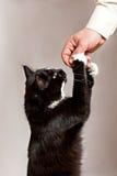 Feeding a pussy-cat Stock Photo