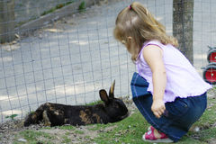 Feeding the Rabbit. A small child feeds a rabbit Royalty Free Stock Images