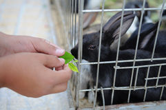 Feeding a Rabbit Royalty Free Stock Images