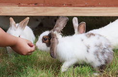 Feeding a rabbit Stock Photos