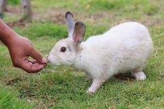 Feeding a rabbit Royalty Free Stock Image