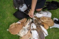 Feeding the rabbits Royalty Free Stock Photo