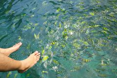 Feeding the reef fishes. In the marine park Royalty Free Stock Photography