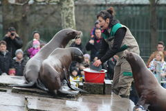 Feeding Sea Lions Royalty Free Stock Images