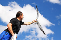 Feeding a seagull Stock Photography