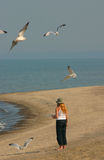 Feeding the seagulls. A woman stands on the beach feeding the seagulls Royalty Free Stock Photo