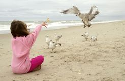 Feeding the seagulls. A young girl feeding the seagulls on the beach stock images