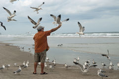 Feeding Seagulls Royalty Free Stock Photography