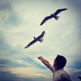 Feeding seagulls Stock Image