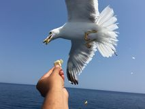 Feeding seagulls Stock Photos
