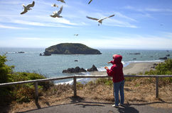 Feeding the seagulls, OR., coastline. Stock Images