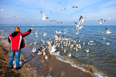 Feeding Seagulls Stock Photos