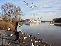 Feeding the Seagulls Stock Photo