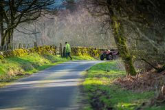 Feeding the sheep. Farmer and a quad bike attending to sheep in rural scotland royalty free stock photo