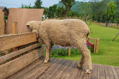 Feeding Sheep Royalty Free Stock Photography