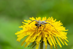 Feeding spider Royalty Free Stock Photos