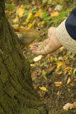 Feeding the squirrel Stock Photo