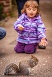 Feeding squirrel Stock Images