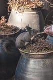 Feeding a Squirrel Royalty Free Stock Image