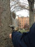 Feeding a squirrel Stock Photos