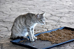 Feeding station. Little cat at feeding station for stray cats in Cyprus. Compassionate people feed the animals and bring water and food Stock Images