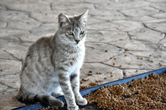 Feeding station. Little cat at feeding station for stray cats in Cyprus. Compassionate people feed the animals and bring water and food Stock Photo